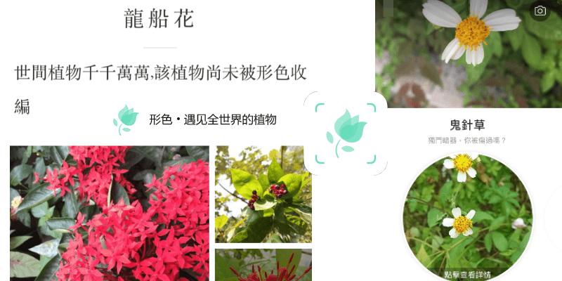《形色App》只要拍下花朵樹葉照片,就能馬上辨識出植物名稱!識花神器(Android、iOS)